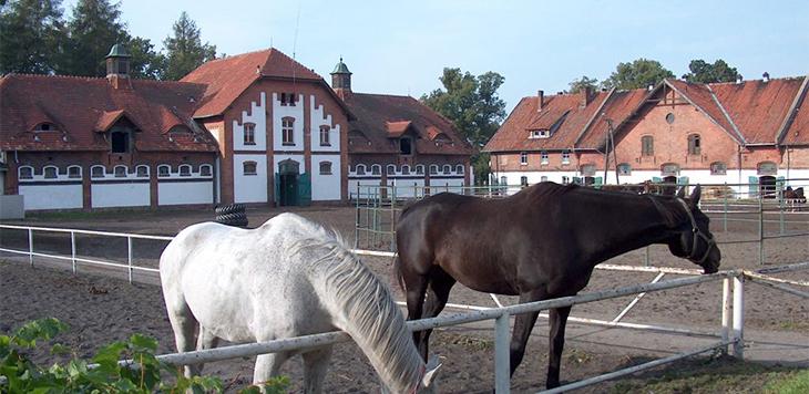 slajd - Konie